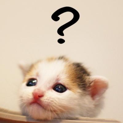 夢占いで猫がたくさん入ってくる・追い払うは不吉な夢?