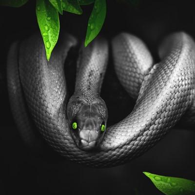 夢占いで蛇が大きい・黒色の場合の意味!トラブルの前兆?
