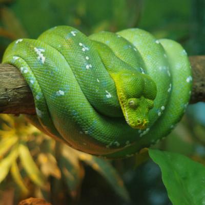 夢占いで蛇が緑色の場合は吉夢?診断結果18を徹底解説