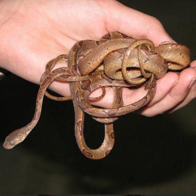 夢占いで蛇が大量に出た時の診断結果13選!吉凶の分かれ目は何?