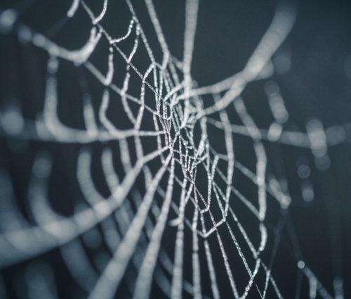 蜘蛛の巣の夢は凶?意味と回避方法を徹底解説!体験談あり