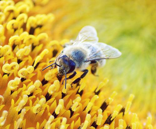 蜂に刺される夢の意味は?刺された場所で吉凶が分かれる!理由を解説