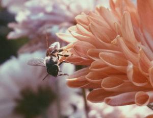 蜂 に 刺され そう に なる 夢