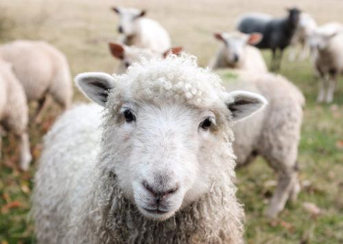 牡羊座の性格を男性と女性で徹底解説!自信家で勇敢なチャレンジャー