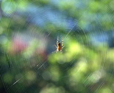 【夢占い】蜘蛛が出るのは凶夢!体験談とともに分かりやすく解説